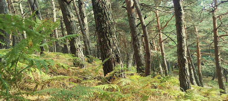 Los árboles son seres vivos que respiran, deciden, sienten y se protegen entre sí