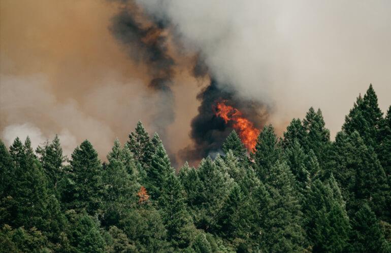 Incendio de un bosque y sus consecuencias