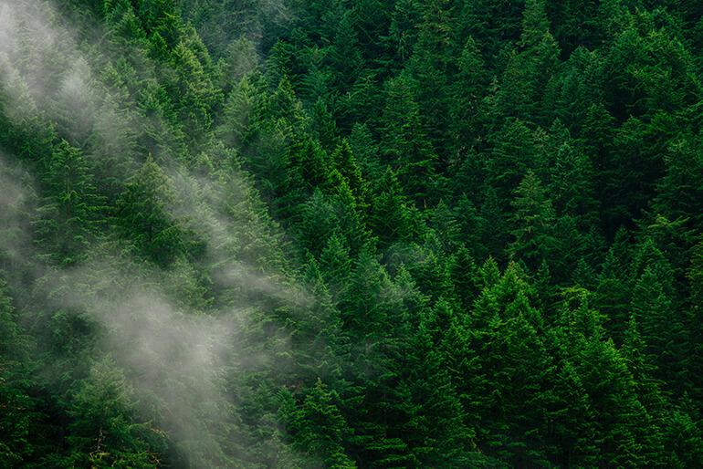 Vista aérea de un bosque con niebla