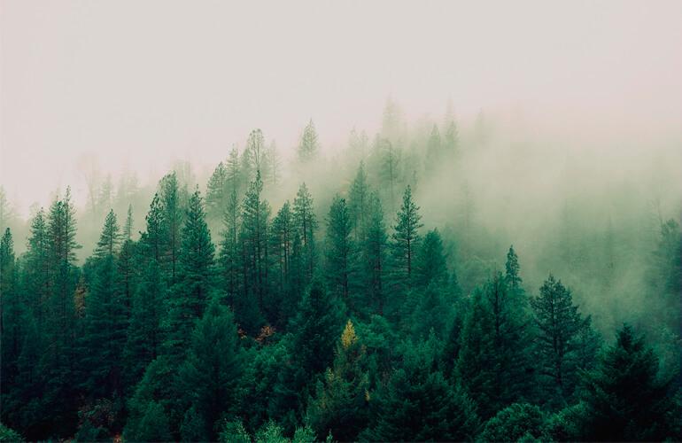 Recursos naturales que el Planeta nos ofrece