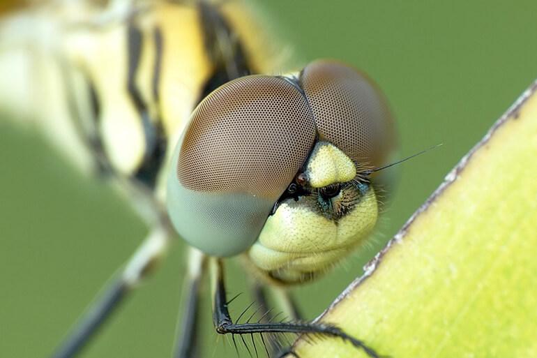 Ojo de una libélula