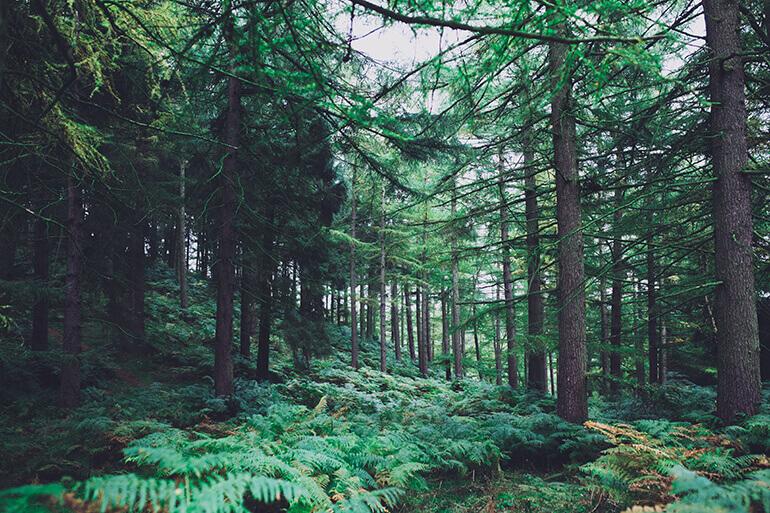 Gestion-Forestal-Sostenible