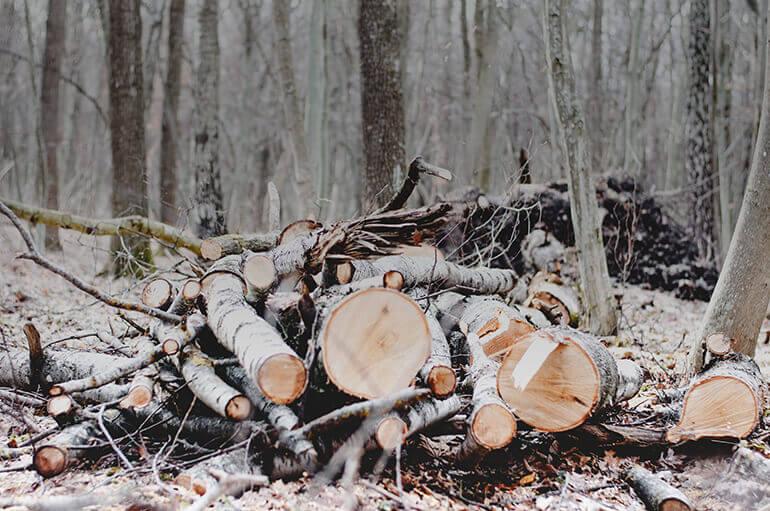 Resulta necesario proteger los bosques y gestionarlos de una manera sostenible