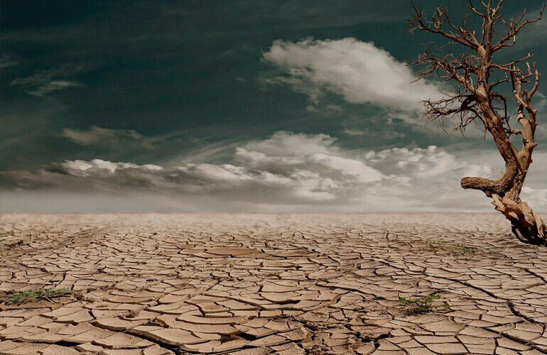 Bosque-Ashes-to-Life-tierra-seca