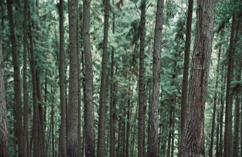 Reservas de la Biosferadeclaradas oficialmente en España