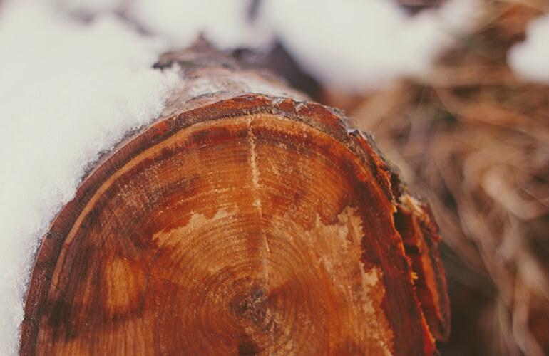 Tronco de árbol cortado cubierto por nieve
