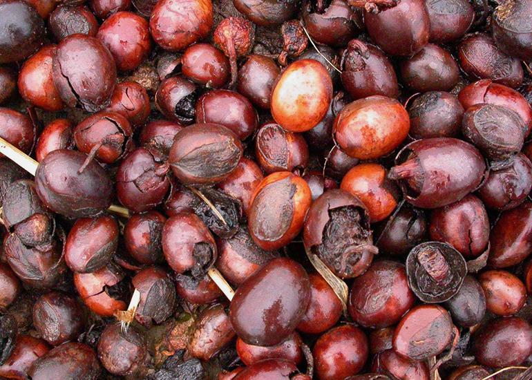 La manteca de karité es uno de los ingredientes de belleza natural más versátiles