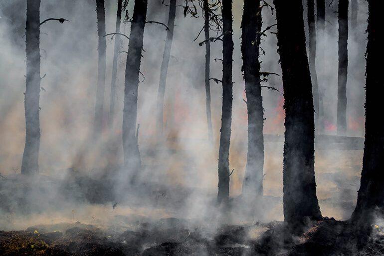 Suelo-Incendios-Consecuencias