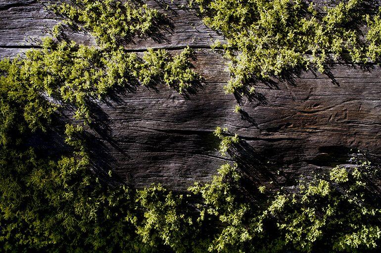 Briofitas-Bosque-Ashes-to-life