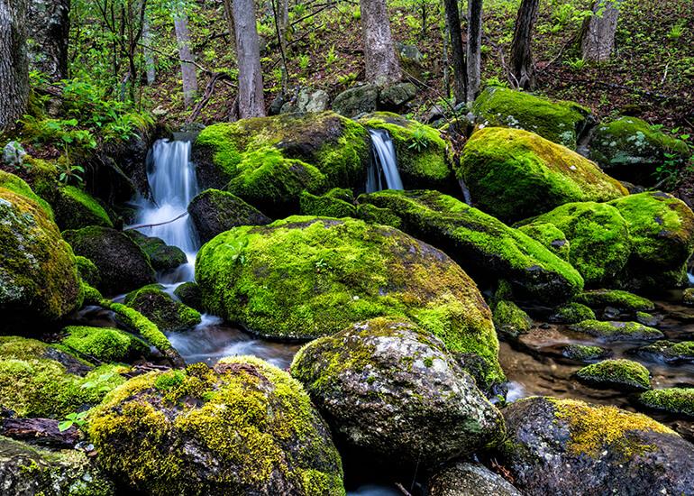 Las briofitas (pequeñas plantas no vasculares compuestas por hepáticas, antocerotas y musgos) son indispensables para el equilibrio hídrico y el buen funcionamiento de los ecosistemas.