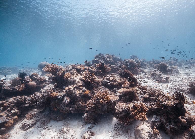 Todo en el mar necesita fitoplancton para existir, por lo que cualquier alteración en él repercutirá en toda la cadena trófica