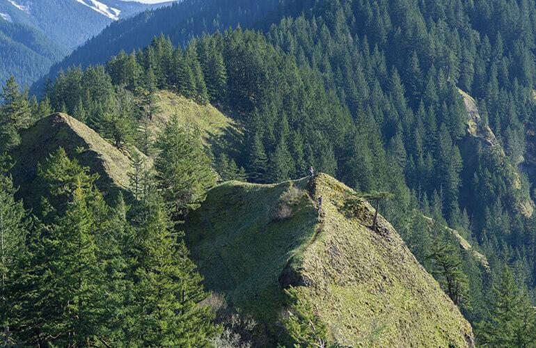 Una gestión forestal sostenible permite obtener mayores beneficios de bosques y conseguir que mantengan su biodiversidad