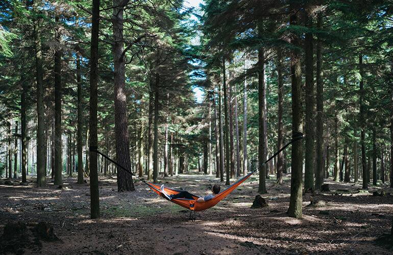 Armonía entre los beneficios económicos, los ambientales y los sociales de los bosques