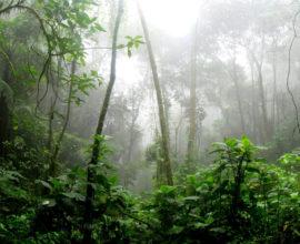 Biodiversidad-Ashes-To-Life