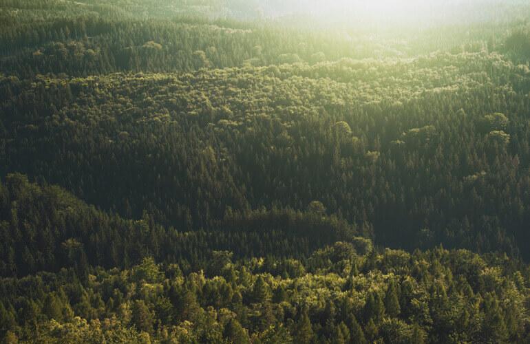 Resulta indispensable conservar los bosques de España que contienen la mayor diversidad ecológica de Europa
