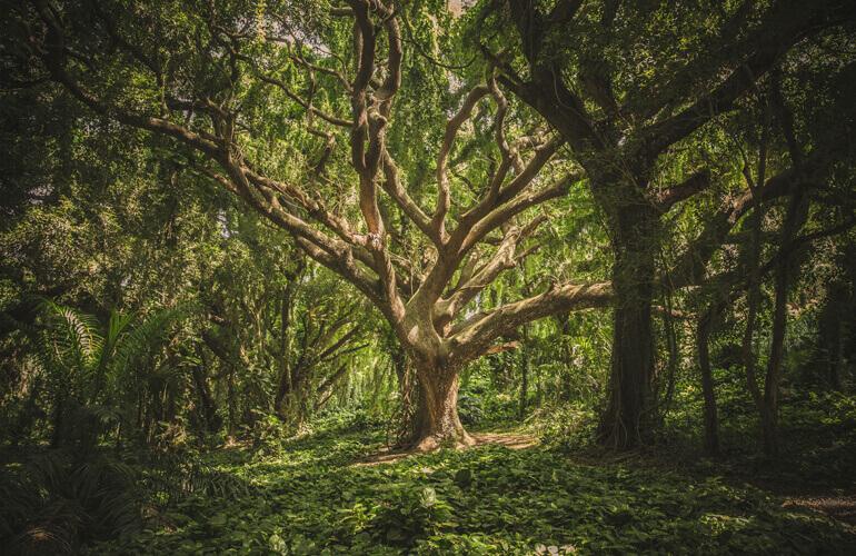 La Península Ibérica y sus archipiélagos conforman un área de gran diversidad arbórea en cuanto a clima, altitud, distribución del territorio y tipos de sustratos