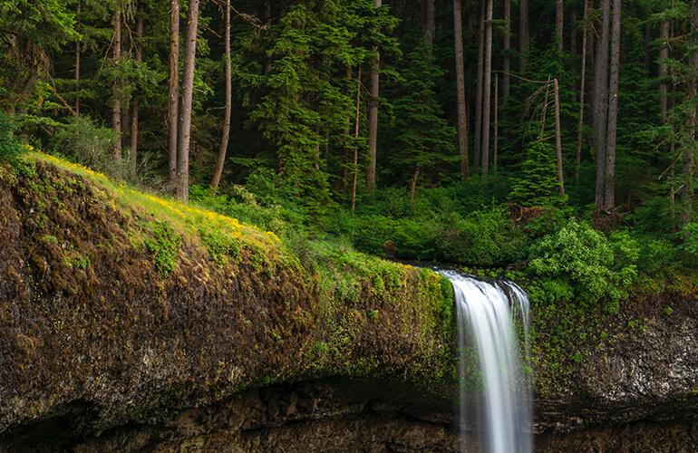 No hay bosques sin agua ni agua sin bosques