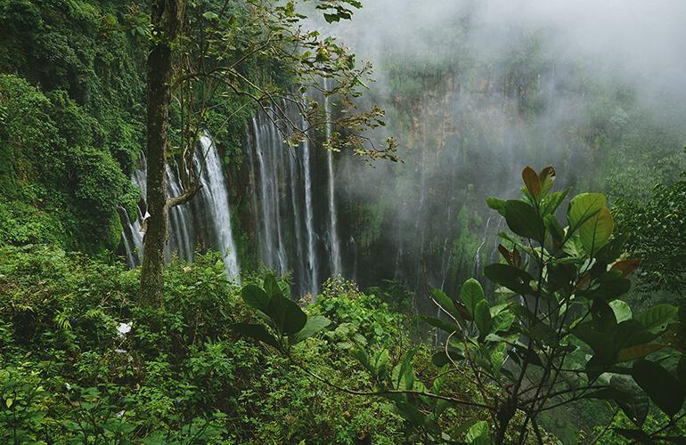 Son numerosos los vínculos entre los bosques y el agua así como su importancia para la vida de cualquier ser y el bienestar humano