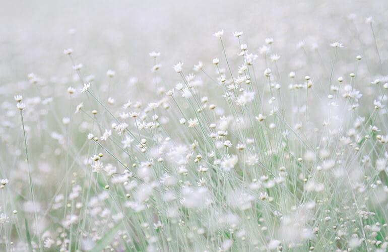 Los principios activos que contienen las plantas determinan las propiedades terapéuticas de cada especie vegetal