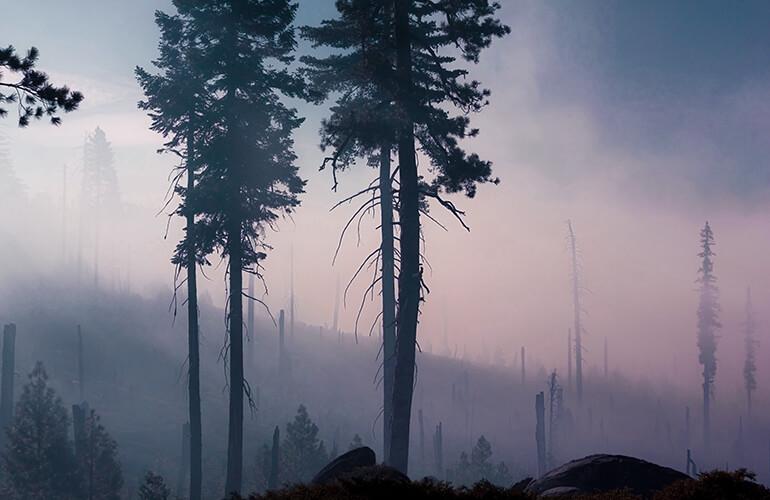 Tras el incendio se debe mitigar los daños a los sistemas de agua potable y proteger las zonas próximas de vegetación no incendiada
