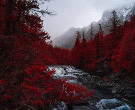 incendios-bosques