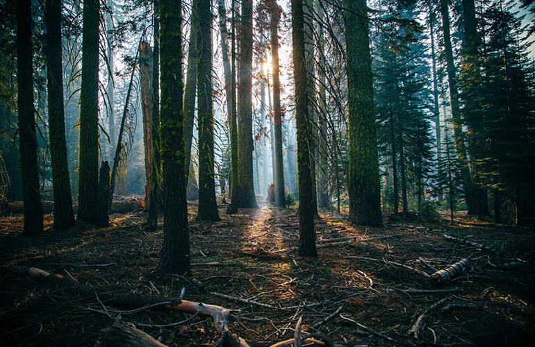 Necesidad de una gestión forestal sostenible para proteger nuestros bosques así como a las personas que los habitan.