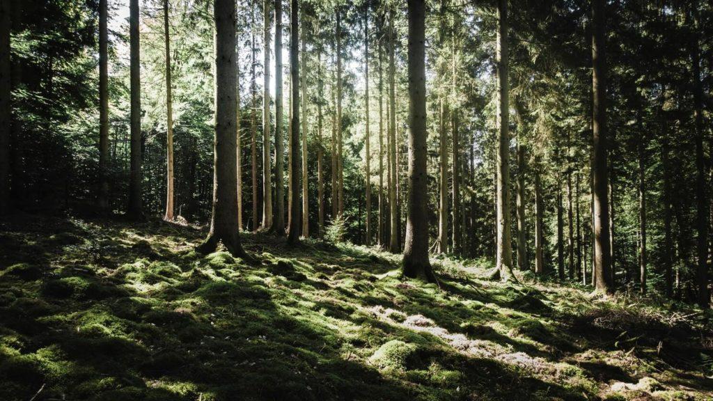 El Parlamento Europeo declara la emergencia climática. Los bosques son esenciales para la reducción de los efectos del cambio climático