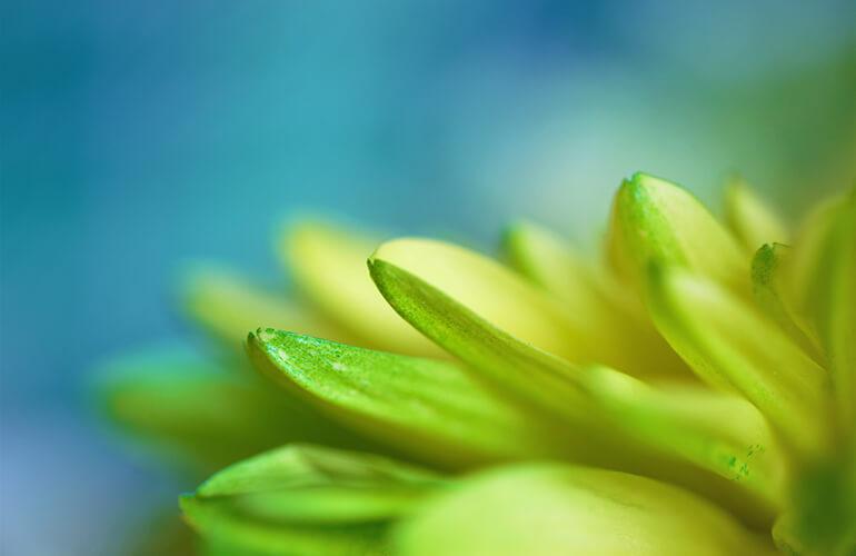 El poder curativo de las plantas y su capacidad reparadora viene dada por la gran variedad de principios activos que éstas sintetizan y almacenan.