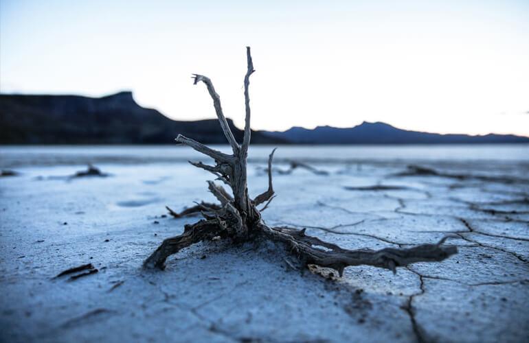 Es necesario retrasar el día de la sobrecapacidad de la tierra y encontrar en equilibrio entre nuestras necesidades y la capacidad que tiene del planeta de regenerarse.