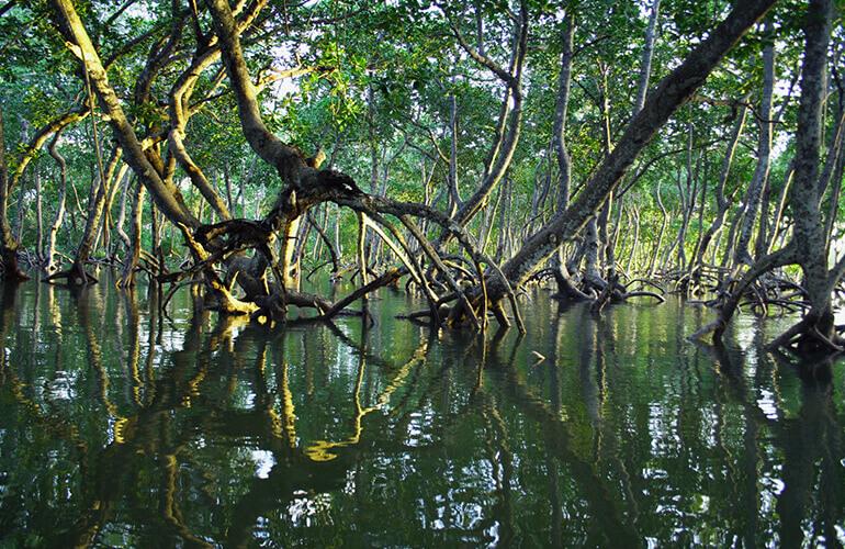 Los bosques azules pueden absorber y almacenar hasta 10 veces más carbono que los ecosistemas terrestres.
