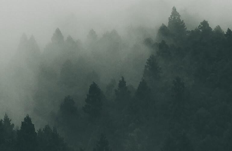 Resulta necesario desarrollar medidas y acciones que protejan, potencien e inviertan en la conservación y mejora de los bosques.