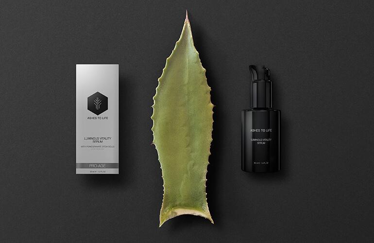 El aloe vera es una de las pocas plantas que contienen más de 200 sustancias, cuyas propiedades beneficiosas, mejoran el funcionamiento de nuestro organismo ayudando a regenerar e hidratar la piel
