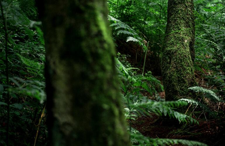 Ashes to Life Project es un Proyecto de Investigación Medioambiental alineado con los Objetivos de Desarrollo Sostenible que permitirá restablecer el equilibrio ecológico entre el ser humano y la naturaleza. Un modelo representativo de la nueva economía regenerativa